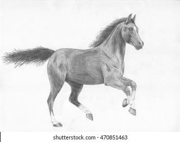 Horse pencil art