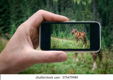 horse, horse photographed on a smartphone, mountain horse phone in hand man (photographing the landscape) photos from your phone, Self, photographing on the phone,