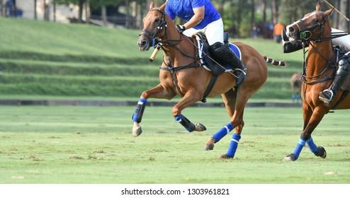 Horse Player battle in match.