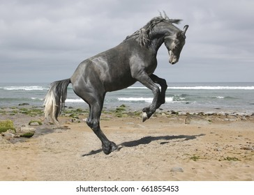 Horse playing on the seashore
