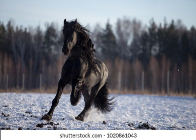 horse playing in the snow