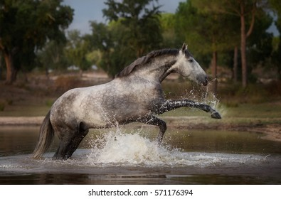 The horse playing in the water