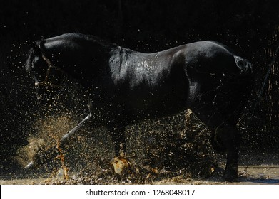 Horse playing with water in mud hole