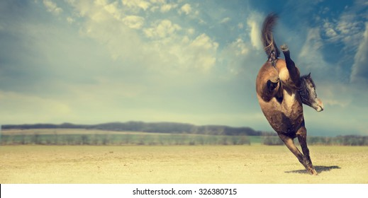 Horse plays and kick backwards on autumn pasture background, banner