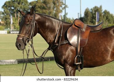 Horse. Polo