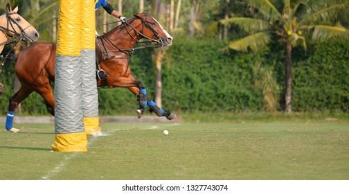 The Horse polo ball is passing through the polo goal.