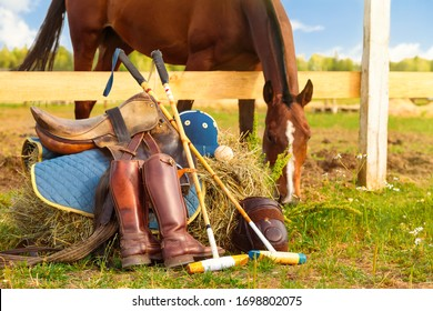 Horse polo concept. Accessories and equipment for playing horse polo are laid at the feet of the horse. Haystack, clothes for the player, saddle, boots, ball and two mallets. Stallion on background