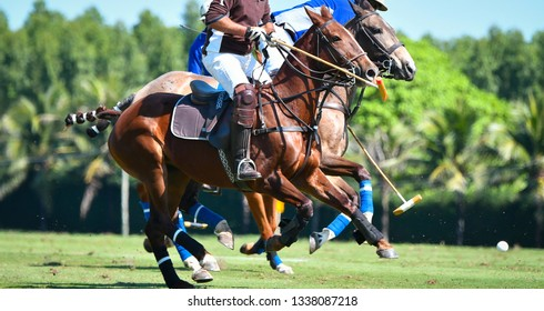Horse Polo Player battle in match.