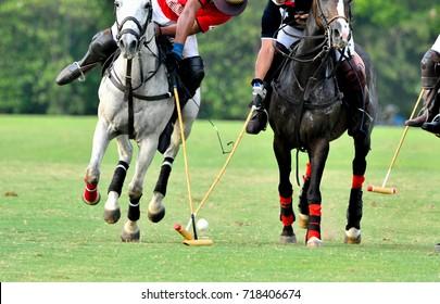 Horse Polo Player protect a polo ball.