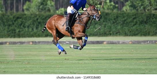 Horse polo player riding a horse.