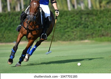 Horse polo player Use the left hand to hit the polo ball in match.