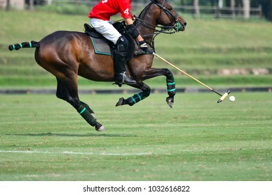 Horse polo player use a mallet hit ball in tournament.