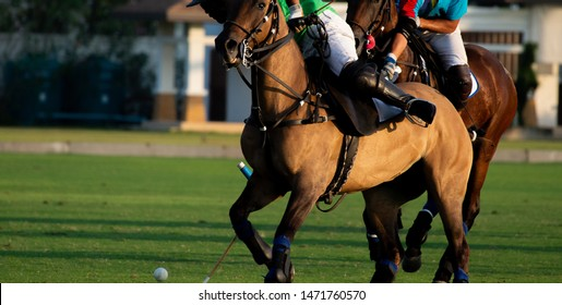 Horse polo player use a mallet hit ball, battle in horse polo sport.
