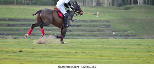 The Horse Polo Sport Run In Macth.