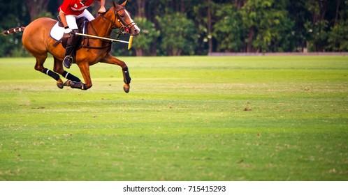 Horse Polo Sport Run In Macth.