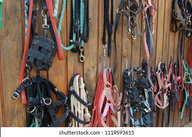 Horse, pony head collars, lead reins and stable halters hanging up on hooks on yard tack shed wall with wooden panels. Good organization in equine yard or riding stables pony club.