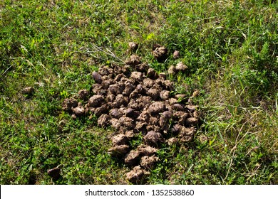 Horse poop on the grass in the summer field. Horse excrement.