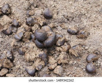 Horse Poop Images, Stock Photos & Vectors | Shutterstock