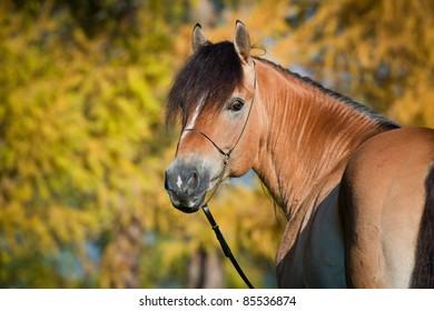 Horse (portrait) in autumn.