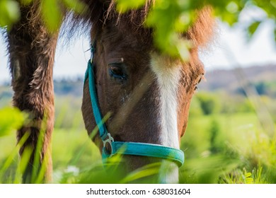 Horse portrait brown and white fur eyes green foreground