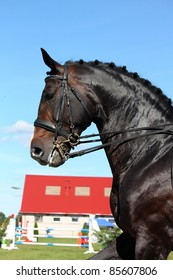 Horse portrait during equestrian show