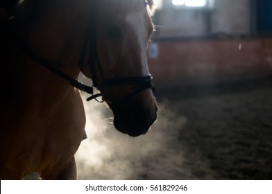 Horse portrait exhale with backlight and no people