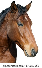 horse portrait with expressive eyes
