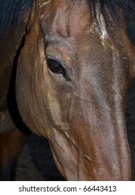 A Horse Portrait Focusing on a Single Brown Eye