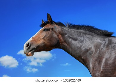 Horse portrait on blue sky background