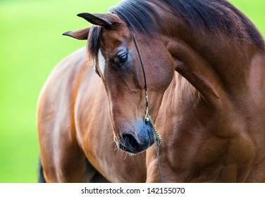 Horse portrait outside in field.