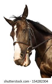 Horse portrait smiling isolated white background