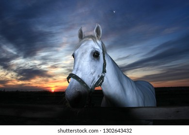 Horse portrait that grazes in the field at sunrise