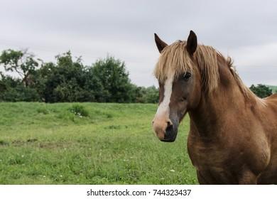 Horse portrait in village