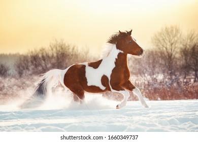 Horse portrait winter gallop snow