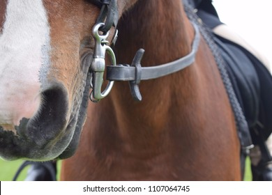 Horse Portraits from Eventing