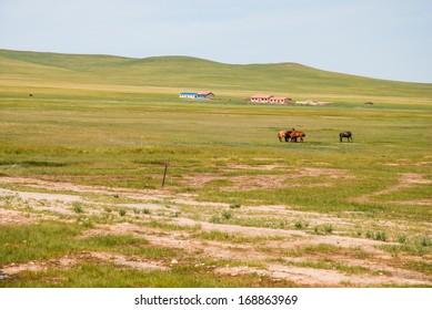 horse in prairie, Inner-Mongolia, China