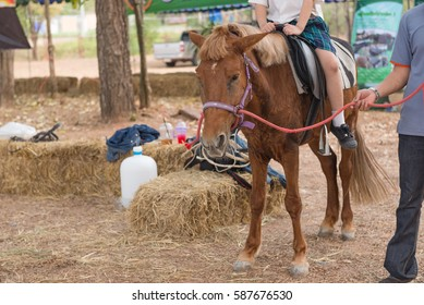 The horse is prepared to give tourists rides.