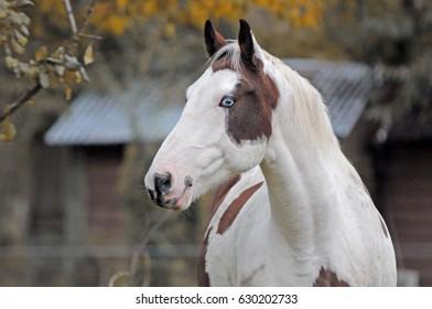 Horse profile. Horse portrait - Shutterstock ID 630202733