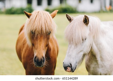 Horse profile. Horse portrait