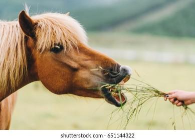 Perfil de cavalo. Retrato de cavalo