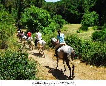 Horse promenade