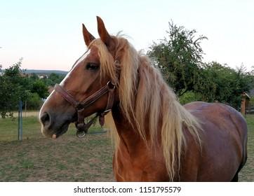 Horse protrait . Horse is beautiful animal with amazing eyes