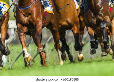 Horse Race Animals Legs Hoofs  Horse race animals closeup bodies legs hoofs speed power running track action photo