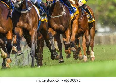 Horse Race Animals Legs Hoofs  Horse race animals closeup bodies legs hoofs speed power running track action photo