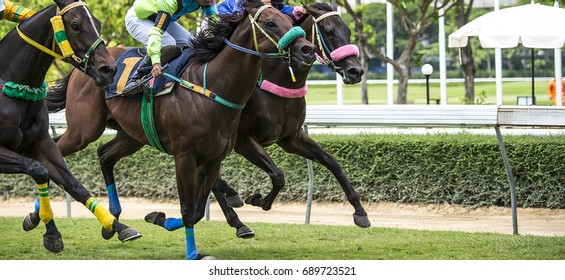Horse race and gallop In competition.