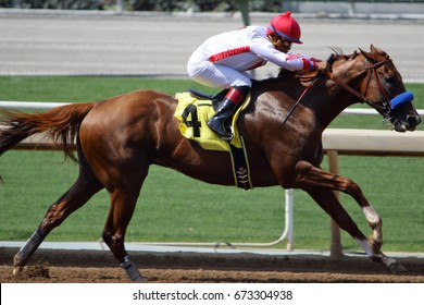 Horse race towards the finish line