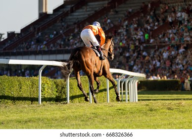 Horse races, jockey and his horse goes towards finish line. Traditional European sport in Czech republic.