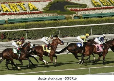 Horse Racing Action at Beautiful Santa Anita Park