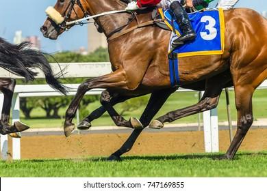 Horse Racing Closeup Body Legs Horse racing closeup abstract animals jockeys legs hoofs running on grass track