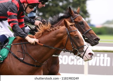 HORSE RACING - Photograph Finish of two racehorses passing Winning Post together at Thirsk Races : Thirsk Racecourse, Nth Yorkshire, UK : 20 August 2018